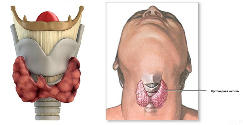 Щитовидная железа: симптомы заболевания у женщин и мужчин